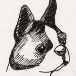 Duffy the Boston Terrier from What Smart Women Read